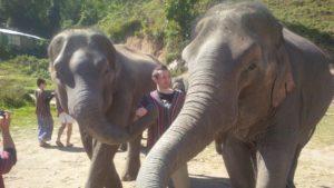 Thailand Chiang Mai Elefant Farm 2018