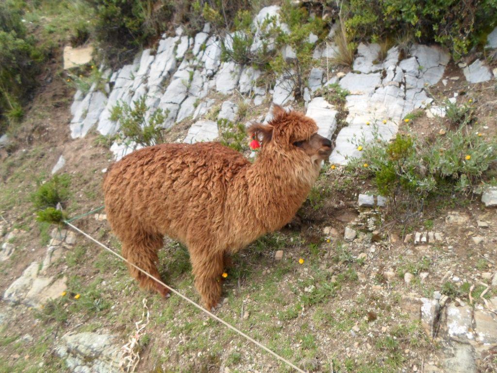 16lake-titicaca-peru-2016sam_2277-1024x768 Peru 2016